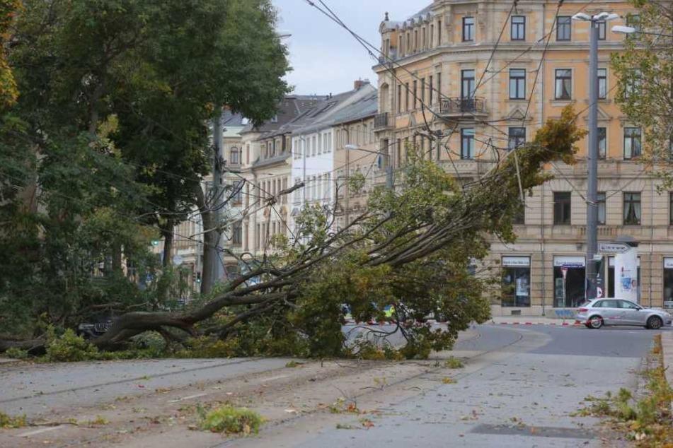 Abgedeckte Dächer, umgestürzte Bäume: Heftige Sturmschäden legen Sachsen lahm