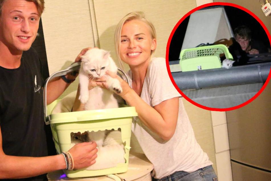Kuriose Höhenrettung: Katze Lori büxt beim Sitting aus und verschanzt sich in Dachrinne