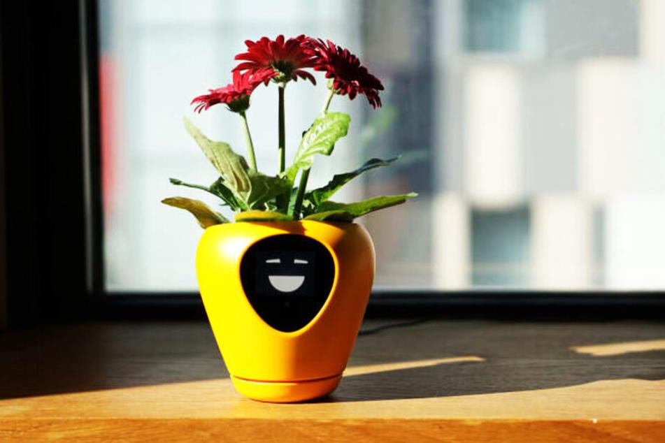 Der Topf blinzelt und zeigt somit an, dass es für die Blume zu hell ist.