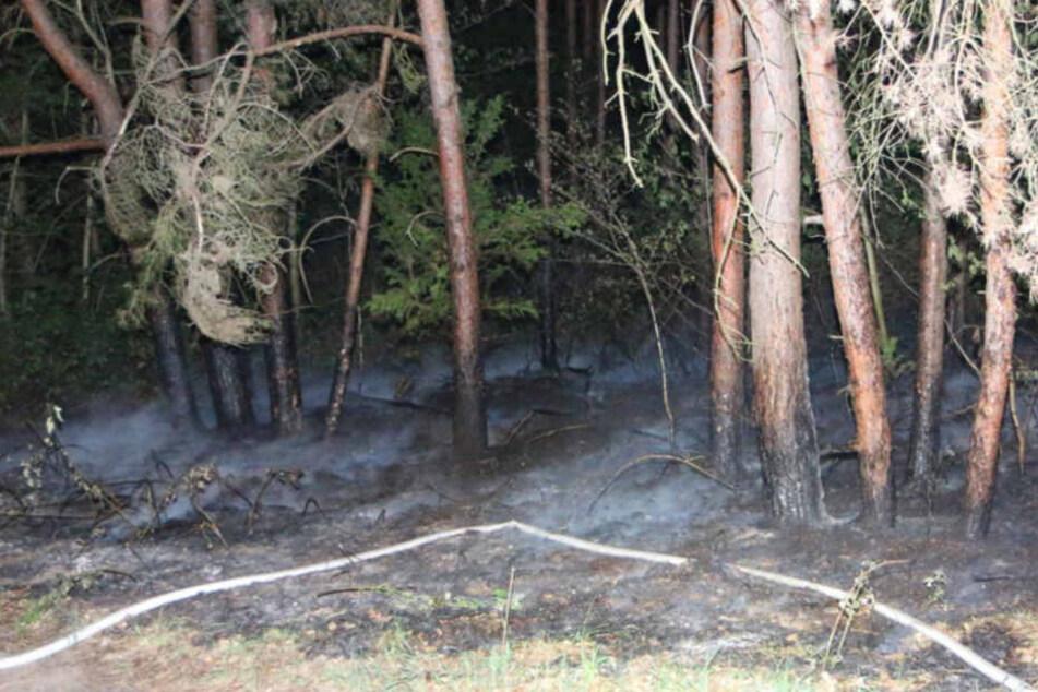 Unscheinbar und doch hochgefährlich: ein brennender Waldboden in Berlin Köpenick!