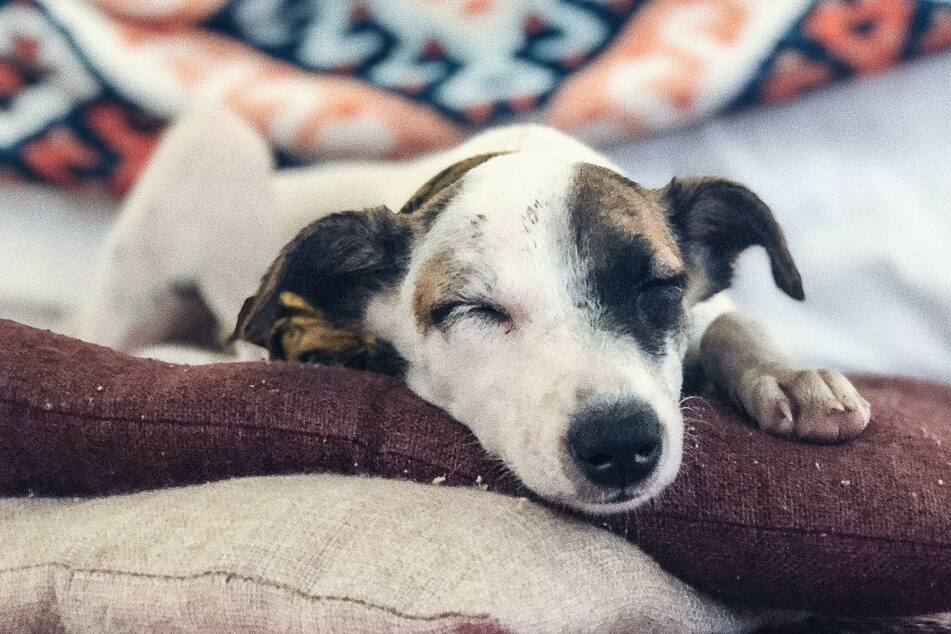 How much do dogs sleep? What owners need to know