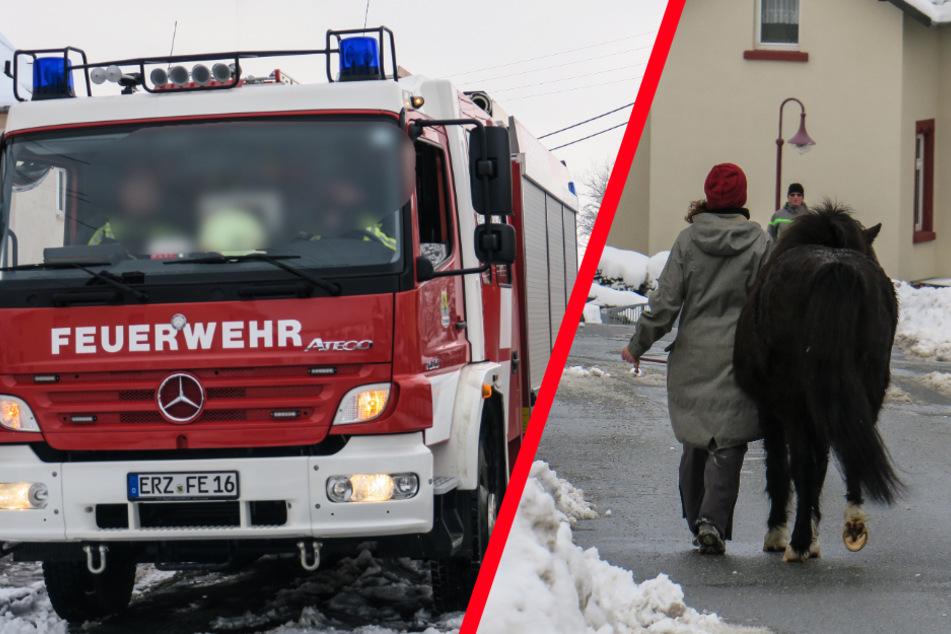 Ponys spazieren durch Ort: Feuerwehreinsatz im Erzgebirge