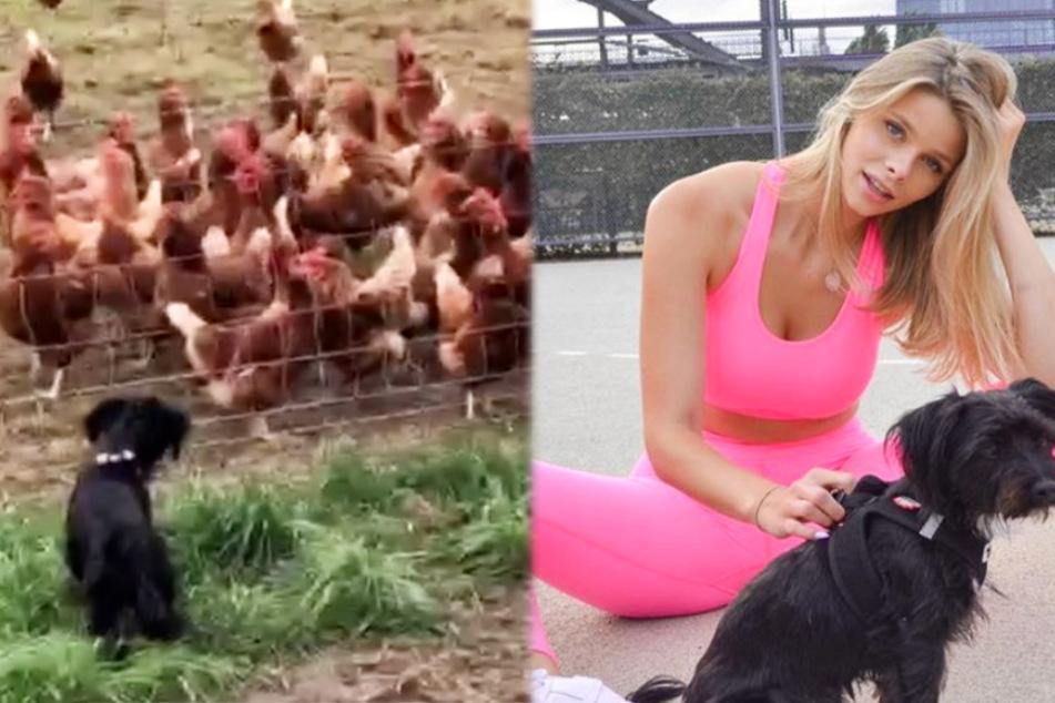 Sexy GNTM-Beauty Larissa erlebt Hühner-Spektakel und lacht sich krumm