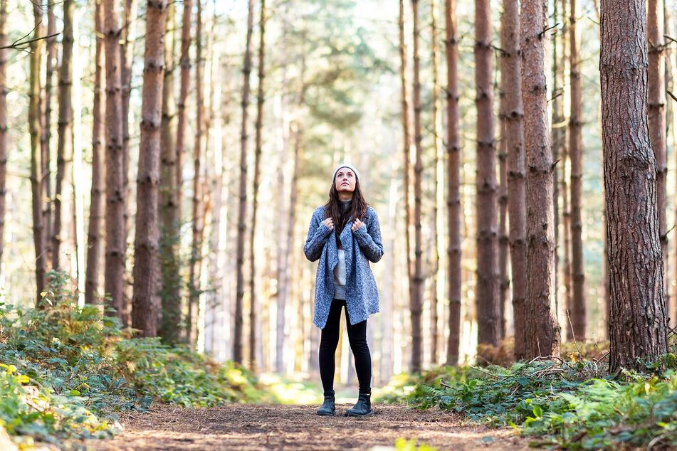 Viele Menschen zieht es auf der Suche nach Ruhe und Erholung in die Wälder.