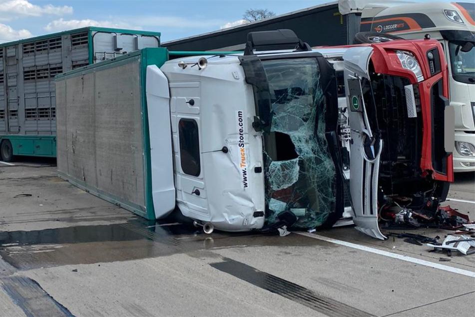 Der Fahrer (53) des Tiertransporters krachte in das Stauende auf der A2, sein Fahrzeug kippte um. Dabei verendeten mehrere Schweine.