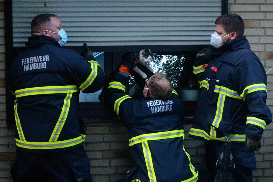 Die Feuerwehrleute retteten die Katze aus ihrer misslichen Lage.
