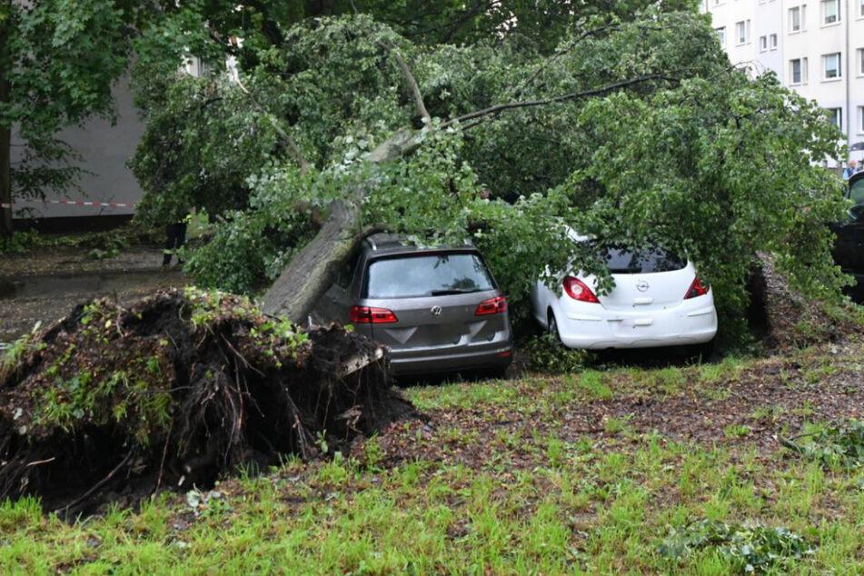 Ein umgestürzter Baum begrub mehrere Autos unter sich. Verletzt wurde niemand.