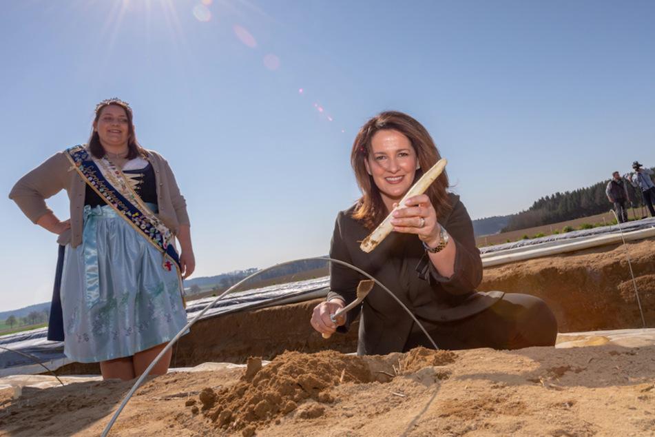 Michaela Kaniber (r, CSU), Staatsministerin für Ernährung, Landwirtschaft und Forsten, besucht einen Spargelbauern im Spargelgebiet Schrobenhausen. Links steht die amtierende Spargelkönigin Juliane Wenger.