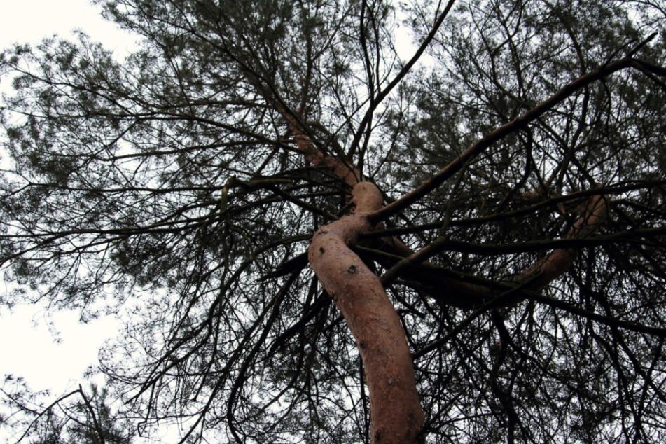 13-Jährige hängt sechs Meter hoch in Baumkrone und ruft 110
