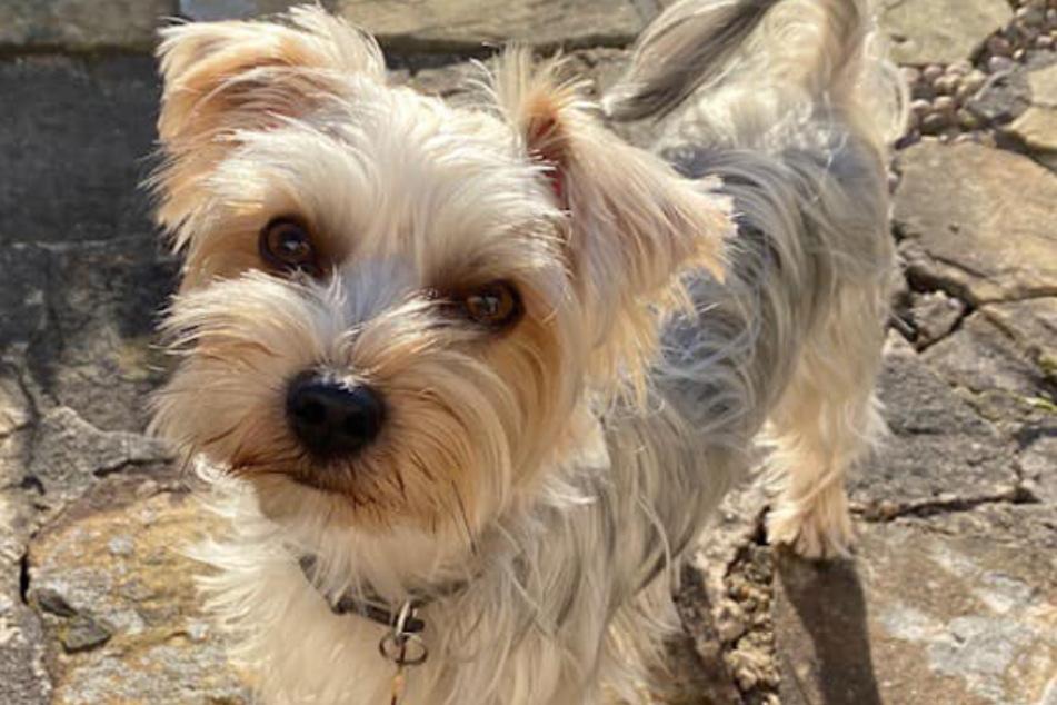Roscoe war ein liebevoller Hund.