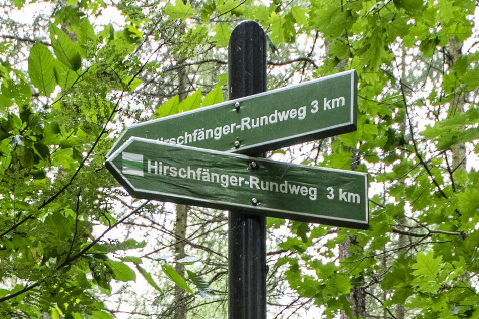 Die Hinweise für den Hirschfänger-Rundweg sind in etwa vier Meter Höhe angebracht.