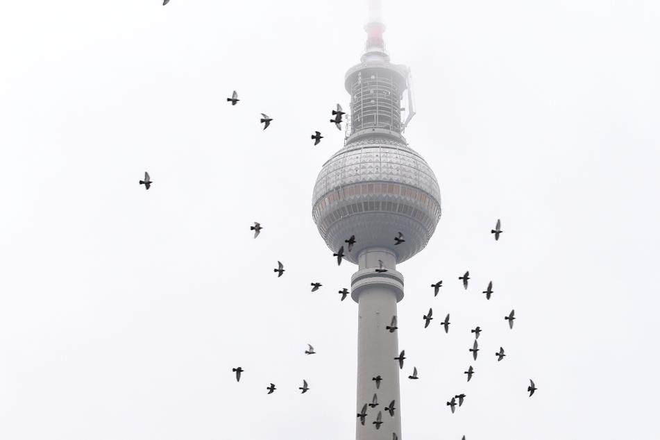 Wolkig, Regen, Gewitter: So wird das Wetter in Berlin und Brandenburg!