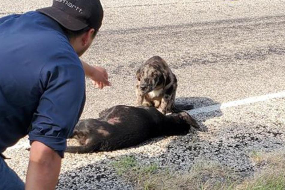 Traurig saß dieser Hund neben seiner toten Schwester.
