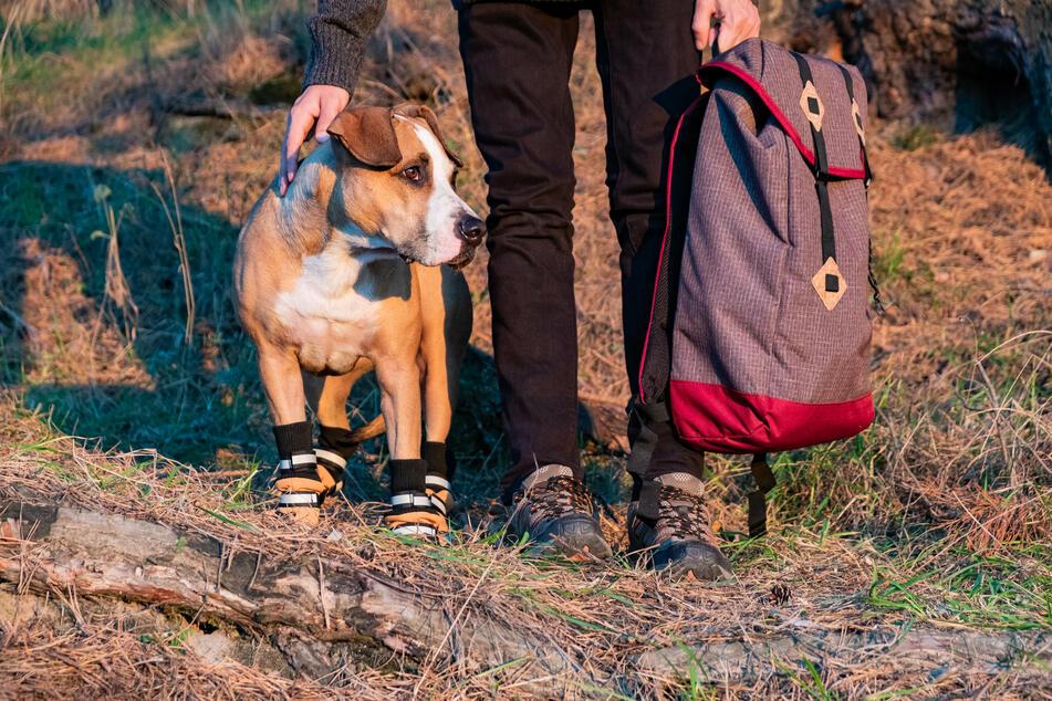 Spezielle Hundeschuhe schützen die Pfoten auf anspruchsvollen Routen.