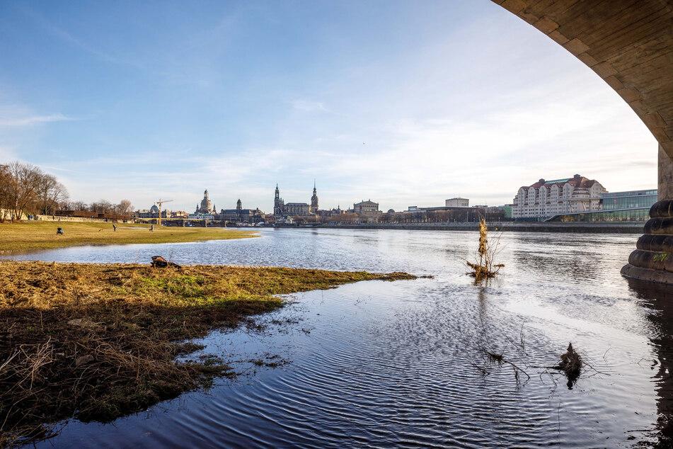 Elbehochwasser an den Dresdner Elbwiesen: An der Marienbrücke ist die Elbe aus ihrem Flussbett getreten - doch viel Schlimmeres bleibt uns wohl erst einmal erspart.