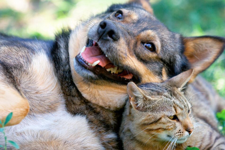 Was Eure Haustiere allein daheim treiben: Internet-Hit bekommt Nachfolger