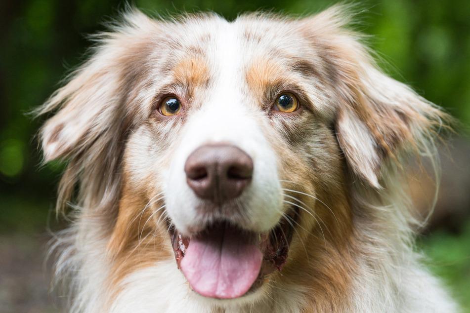 Der Trend zum Haustier habe sich schon vor der Pandemie entwickelt, soweit die Steuereinnahmen ein Indiz dafür sind.