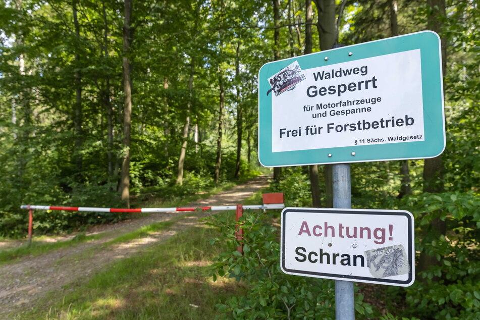 Wer den Hartmannsdorfer Forst besucht, sollte die Waldwege nicht verlassen.