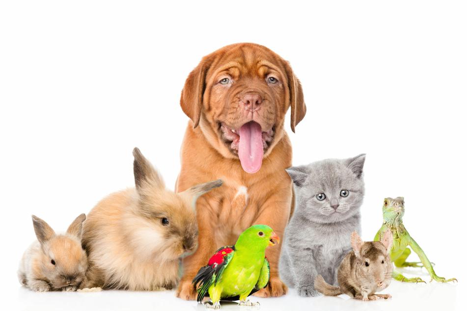 Wie Ihr richtig mit Eurem Haustier umgeht, erfahrt Ihr im Haustierratgeber.