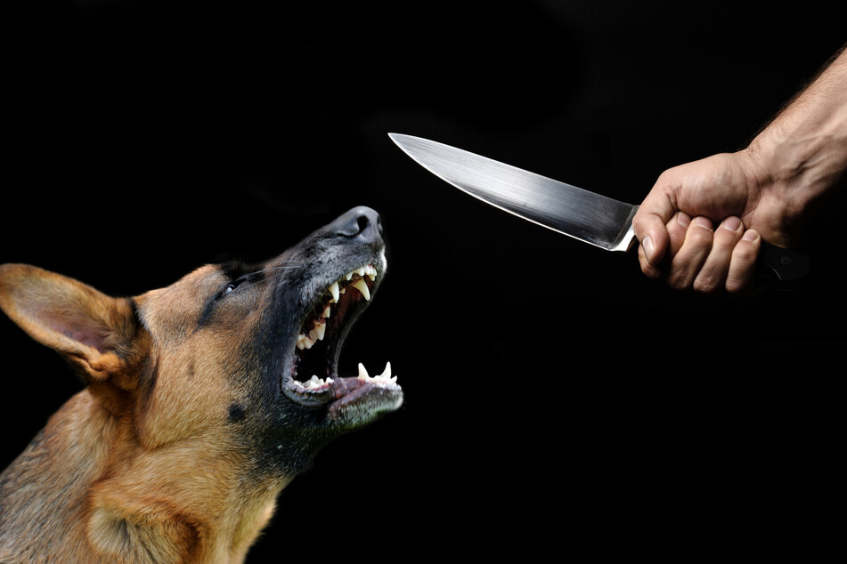 Man claims to be God before stabbing himself and his dog