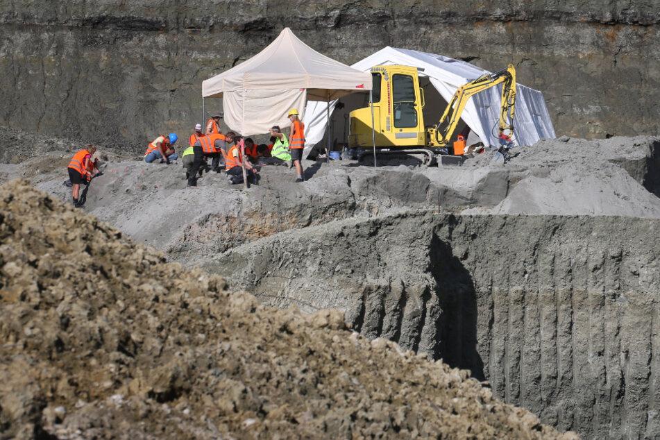 Der Fund eines rund 11,6 Millionen Jahre alten Menschenaffen in der Tongrube hatte international Aufsehen erregt.