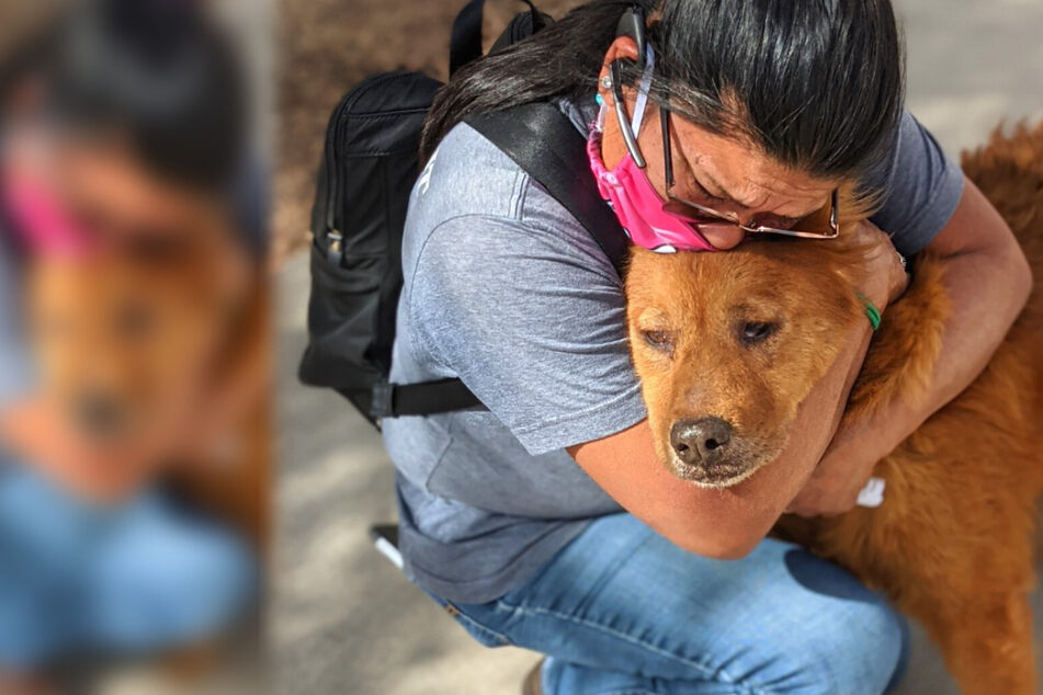 Thanksgiving miracle: dog and owner reunited after years apart