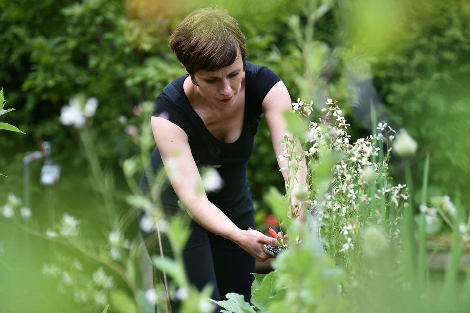 Die Bloggerin Carolin Engwert aus Berlin schneidet in ihrem Schrebergarten in Schöneweide Pflanzen. Gärten und Balkone erleben durch Corona einen neuen Boom, Grüne Oasen sind gefragter denn je.