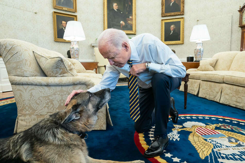 President Biden is pictured with his dog Champ in the Oval Office.