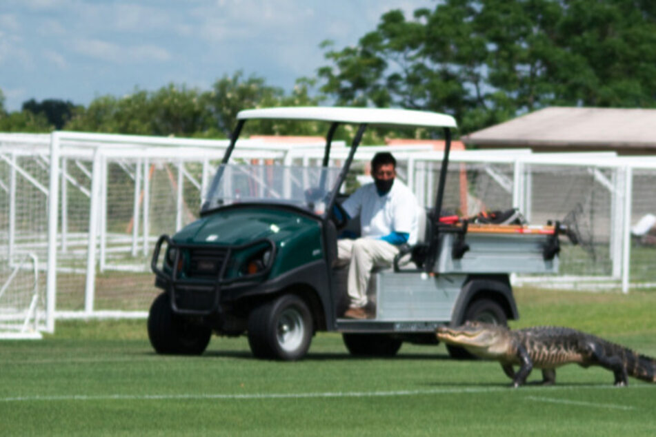 Toronto FC received a surprise recruit at soccer practice – a Florida gator!