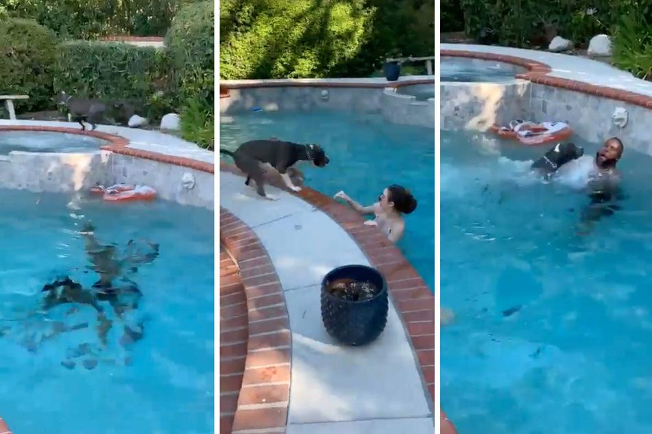 Kaum sieht der Hund, dass sein Herrchen zu ertrinken droht, rennt er los und springt ins Wasser (v.l.n.r.).