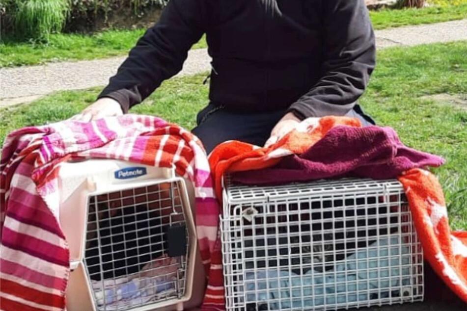 Am Samstag kamen zwei Katzen aus dem Tierheim Bergheim bei Köln lebenslänglich ins Gefängnis. Bei Instagram berichtete das Tierheim von den kuriosen Umständen.
