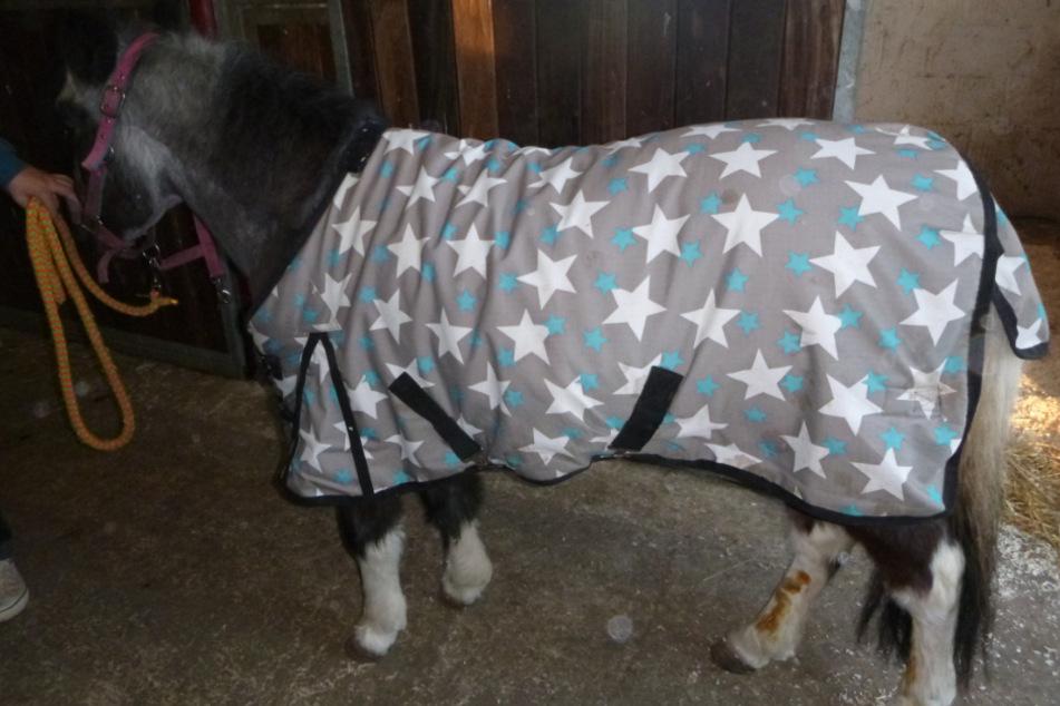 Tierquäler verletzt Pony in Pferdebox mit Hufmesser