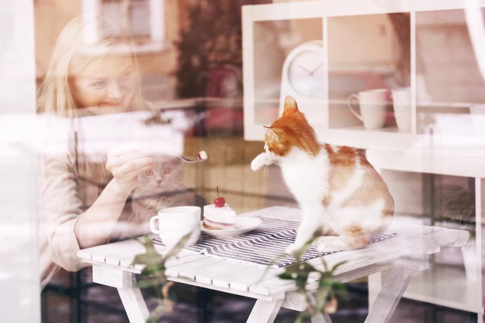 Eine Frau sitze mit Kaffee und Kuchen sowie zwei Katzen an einem Tisch in einem Katzencafé. (Symbolbild)
