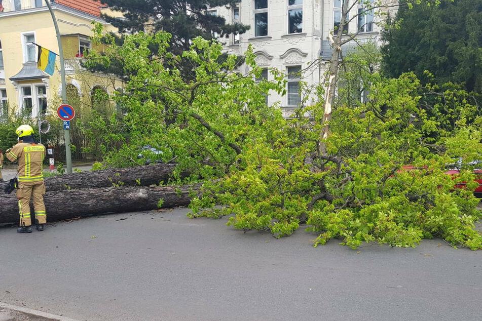 Berlin: Bäume stürzen auf Autos: Dutzende Sturmeinsätze für Berliner Feuerwehr