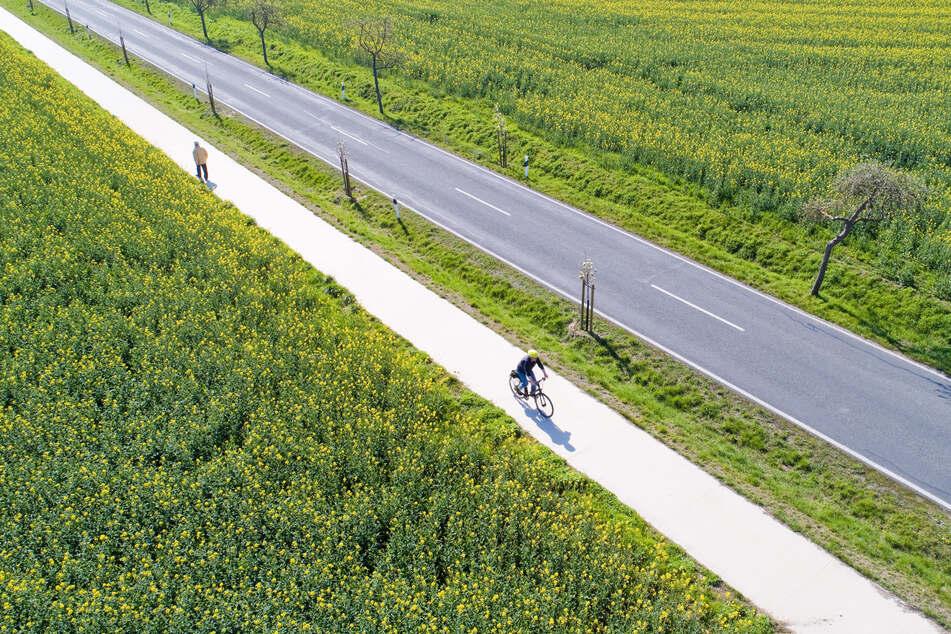 Ein Fahrradfahrer radelt über einen Radweg an einer Landstraße entlang (Archivbild).