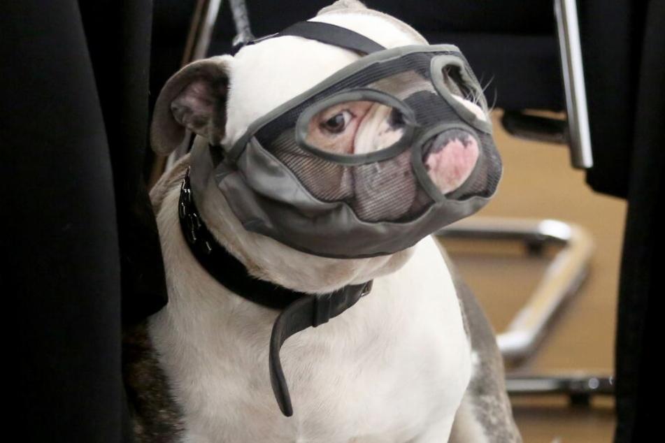 Die Klägerin erklärte, dass ihr Hund harmlos sei.
