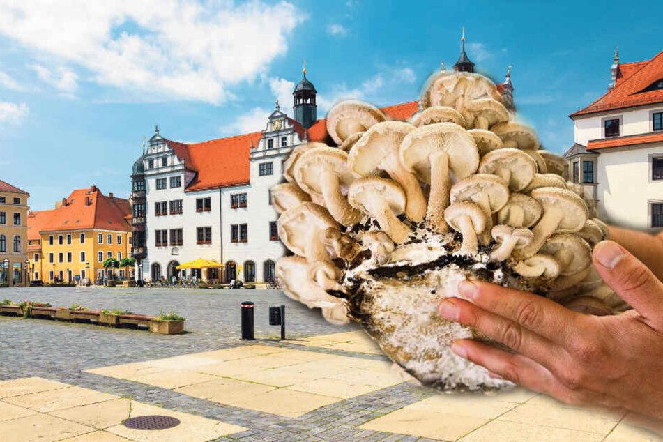 Torgau soll europäische Pilzmetropole werden, doch für den Investor gibt es einen großen Haken