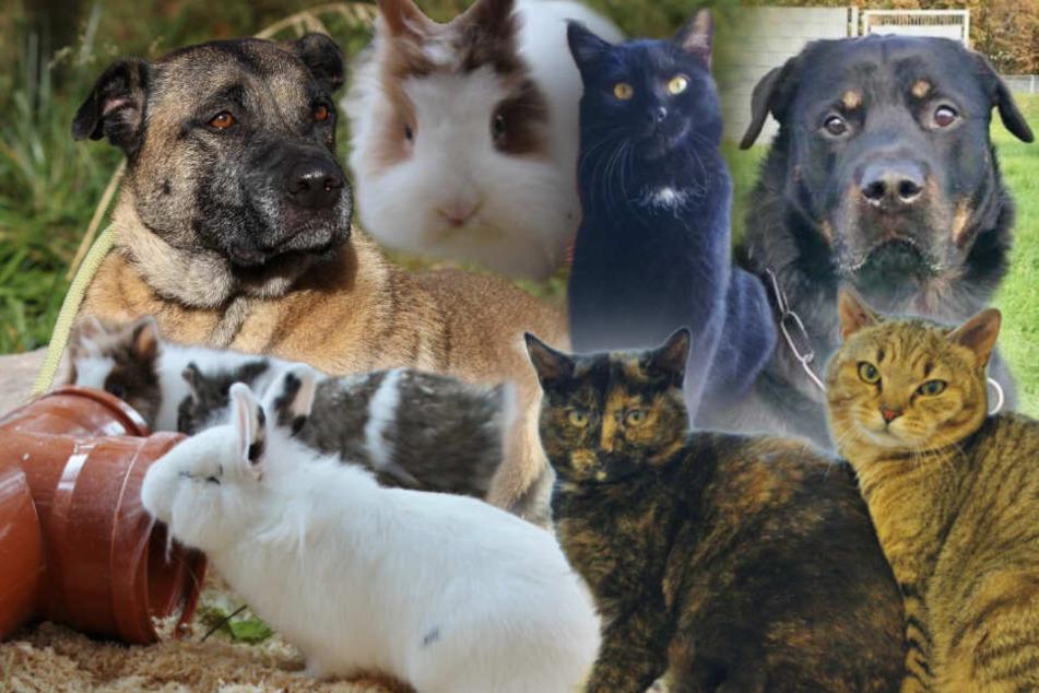 8 besondere Tiere: Diese Hunde, Katzen und Kaninchen suchen eine zweite Chance