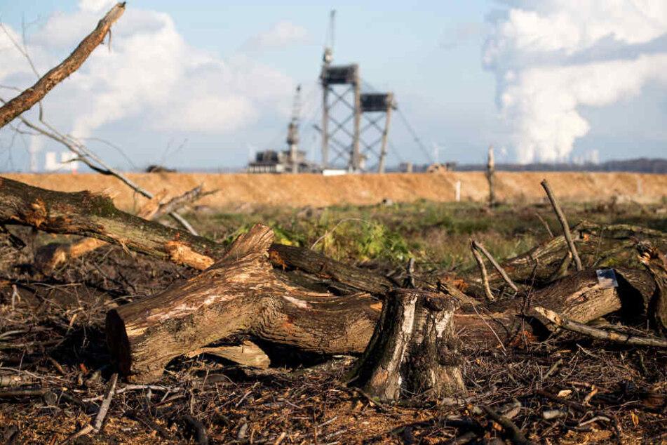 Streit spitzt sich zu: Bei Rodungen droht Umweltverband mit drastischen Folgen