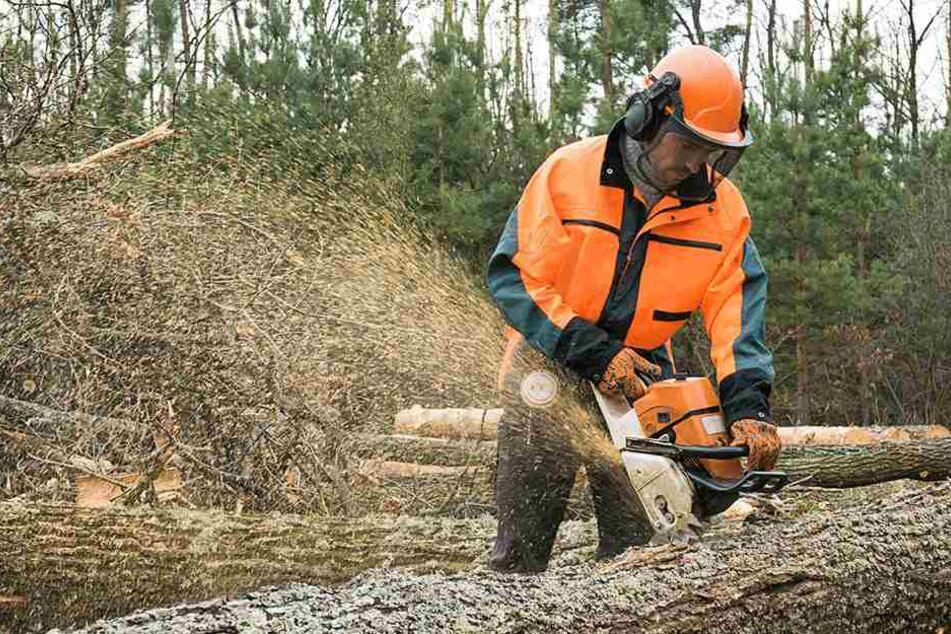 Nach den schweren Herbststürmen: Noch lauert im Wald die Gefahr von oben