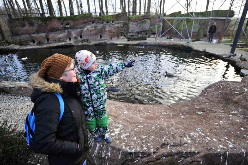 Tina Hanke (35) und Söhnchen Max (4) schauten am Montag bei der Fütterung der Pinguine zu.