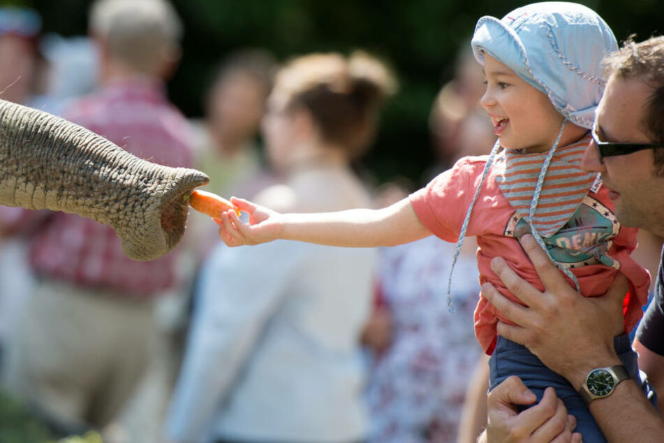 Am Montag lädt der Tierpark Hagenbeck zu seinem 111. Geburtstag ein (Archivfoto).