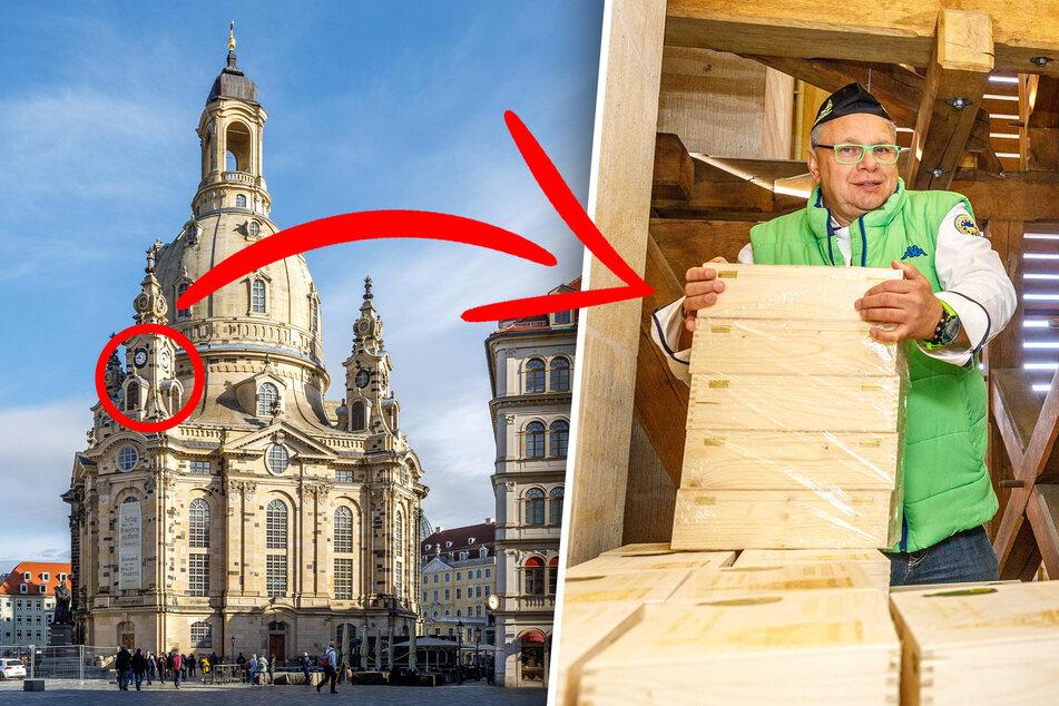 Dresden: Himmlischer Striezel! Dresdner Bäcker lässt Stollen in der Frauenkirche reifen
