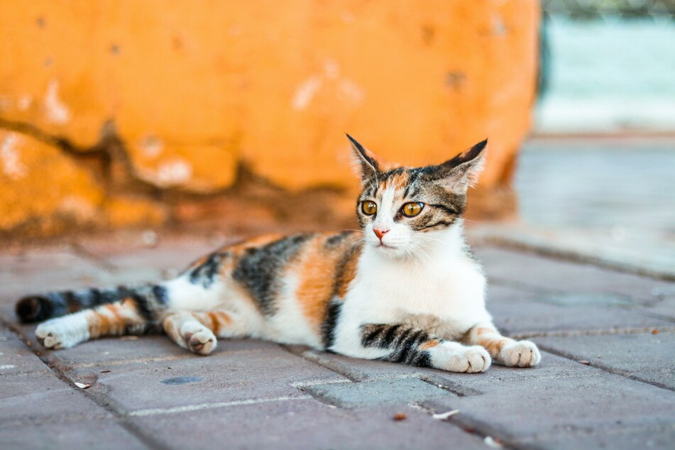 Katzen altern anders als Menschen.
