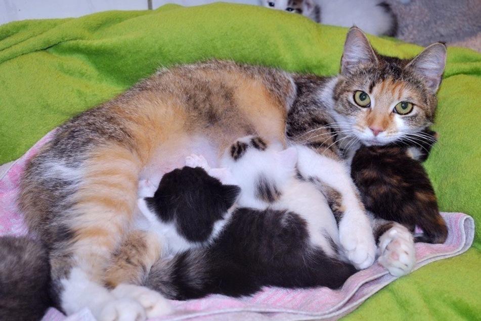 Clara kümmert sich um die hungrigen Kätzchen.