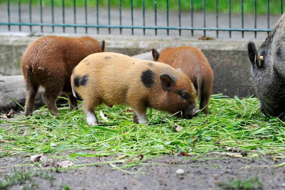 Die Tiere im Tierpark fressen im Sommer gern frisches Futter, doch das wird langsam knapp.