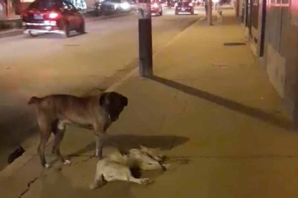 Trauriges Ende einer Freundschaft unter Hunden.