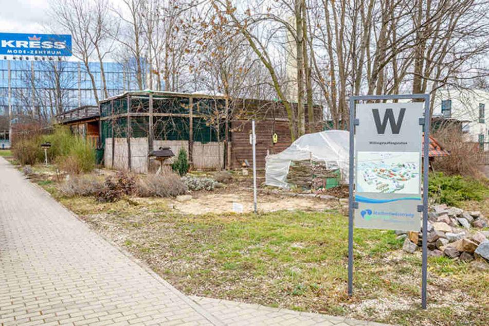 In der Wildvogelauffangstation des  Dresdner Umweltzentrums warten über 30 Vögel auf ihre Entlassung.