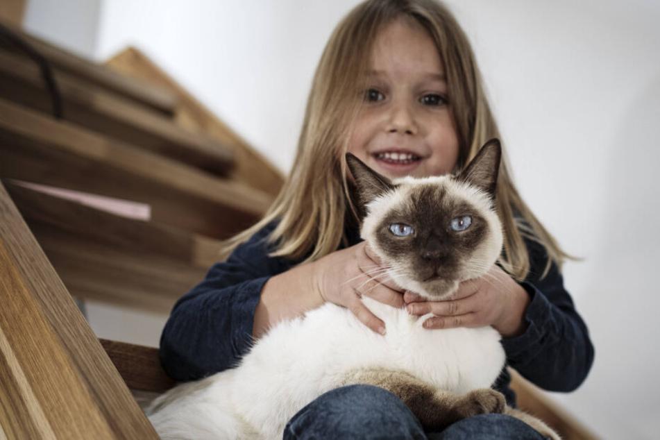 Bei Katzen lauert die Gefahr im Mund - zahlreiche Bakterien können bei einem Biss für eine böse Entzündung sorgen.