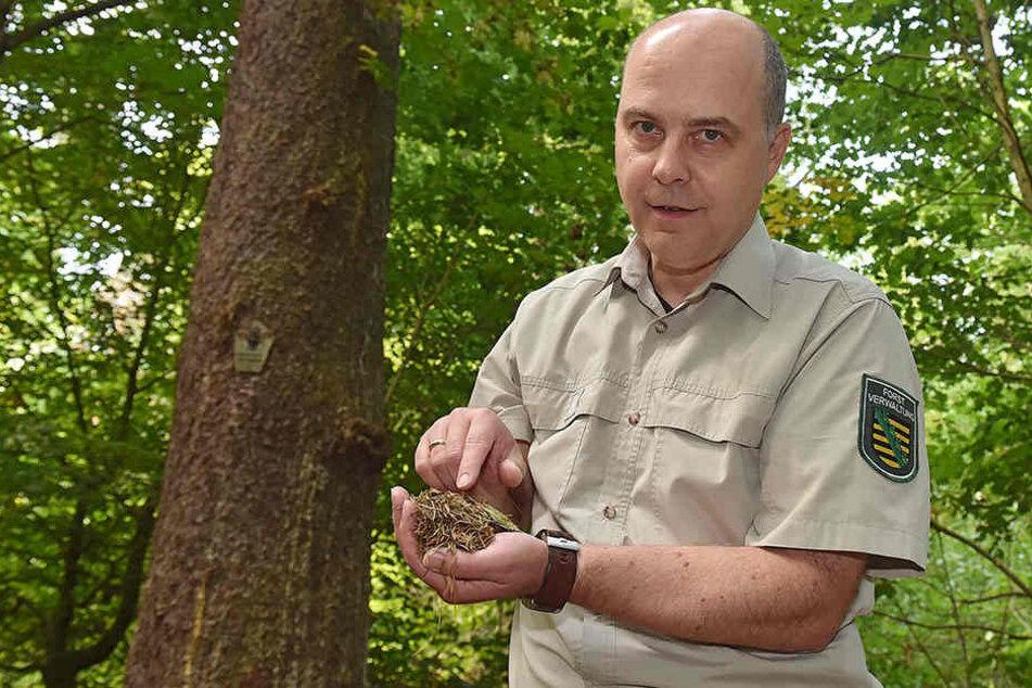 Markus Biernath im Prießnitzgrund. Die Fichte im Hintergrund ist ein Naturdenkmal mit 102 cm Stammdurchmesser.
